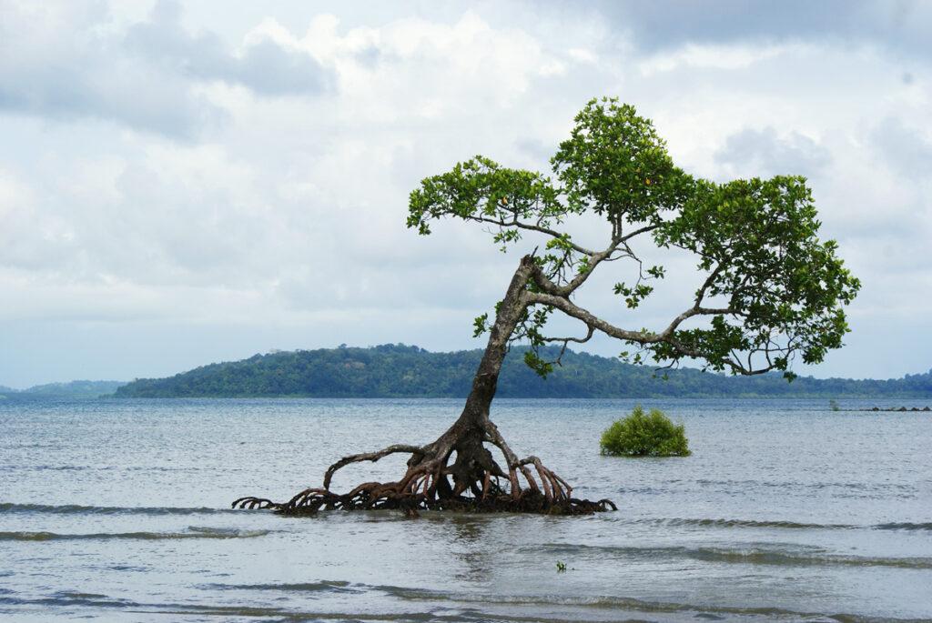 Mangrove fighting sea level rise.